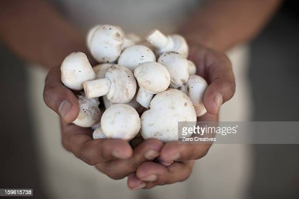 Close up of hands holding mushrooms