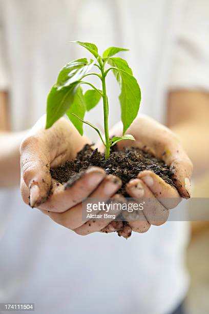 Close up of hands holding plant