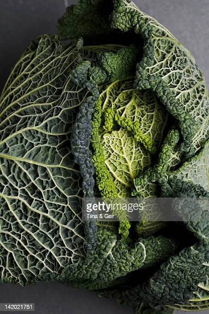 Close up of head of cabbage