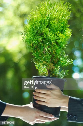 Close up of Hispanic businesswomen holding potted tree : Foto de stock