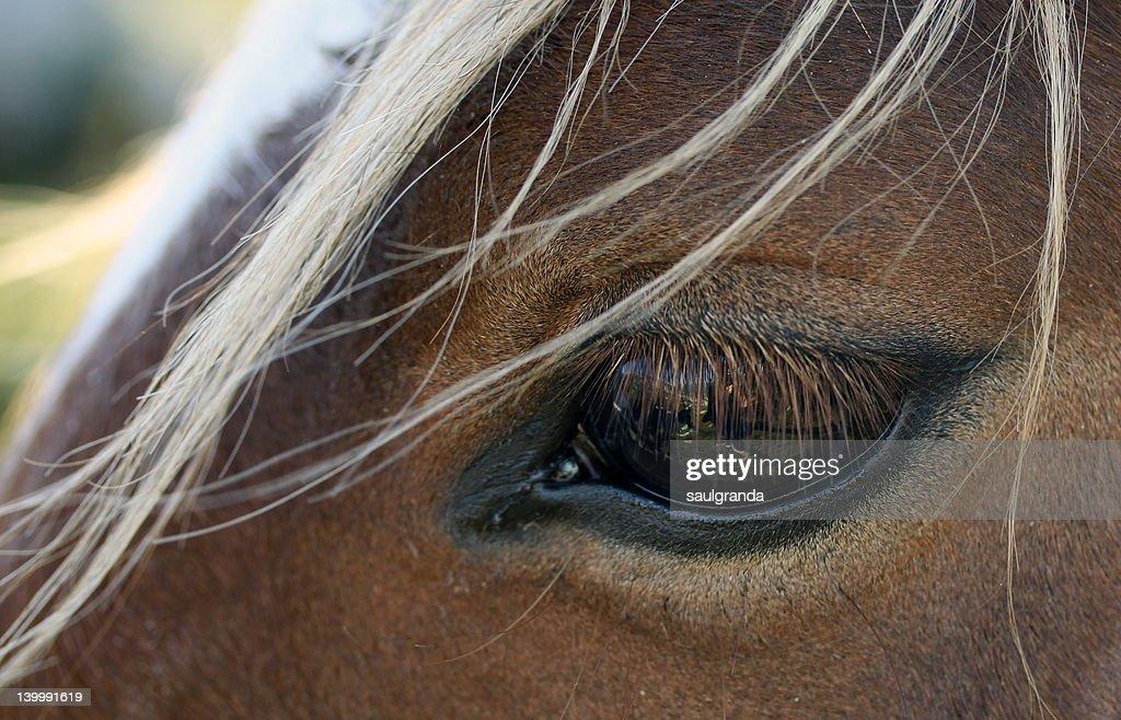 Close up of horse eye : Stock Photo