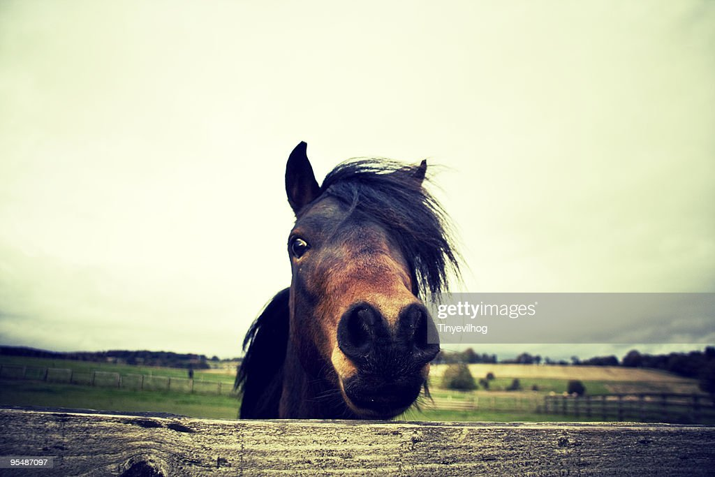 Close up of horse : Stock Photo