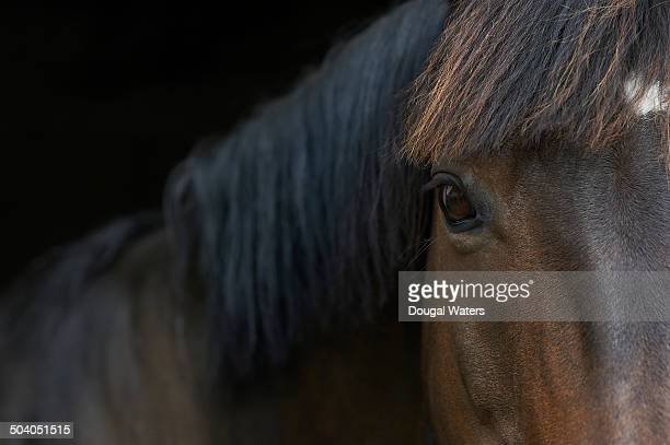 Close up of horse's eye.