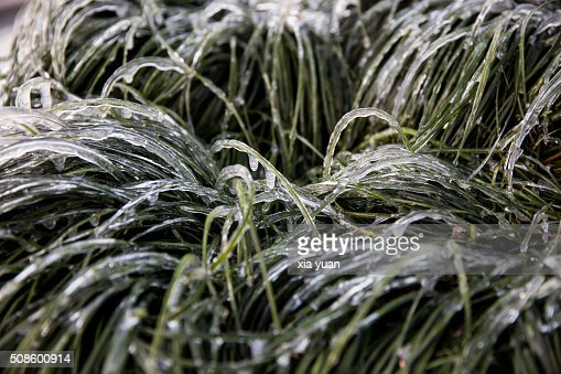 Close up of ice covered grass : Foto de stock