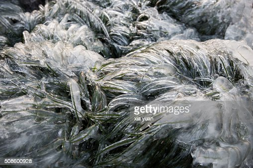 Close up of ice covered grass : Stock Photo