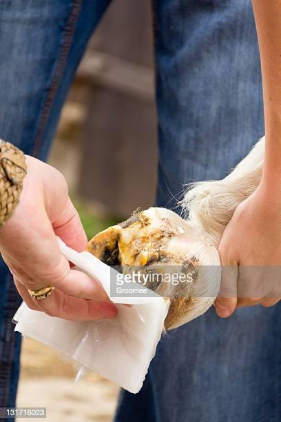 Nahaufnahme des injuried Pferde HUF als bandage angewendet wird