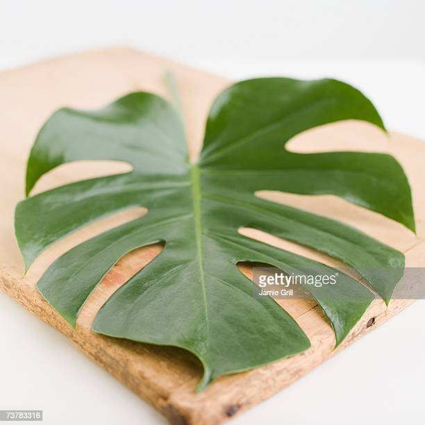 Close up of leaf on wooden board