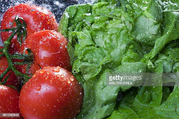 Close up of lettuce and vine tomatoes being washed