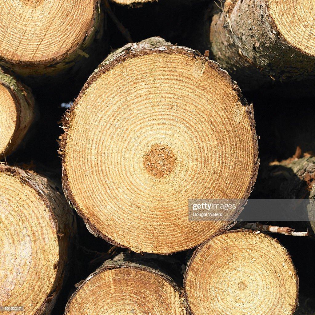 Close up of log.