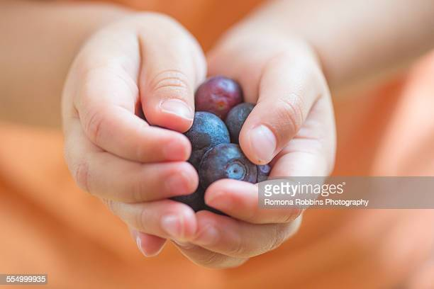 Close up of male toddlers hands holding blueberries