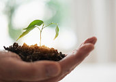Close up of mans hand holding seedling