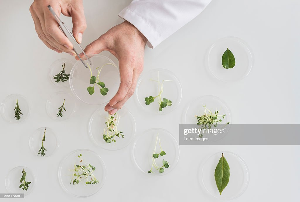 Close up of mans hand preparing plants in laboratory