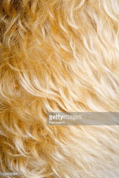 Close up of mixed breed dogs fur.
