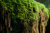 Close up of moss growing on log
