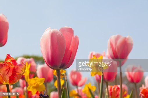 Close up of multiple colored flowers : Stock Photo