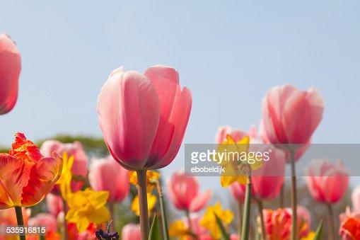 Plano aproximado de várias Flores de Cor : Foto de stock