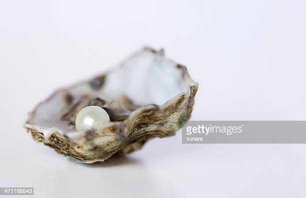 Close up of oyster with pearl on white background