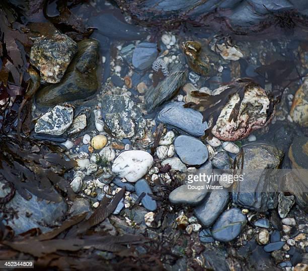 Close up of pebbles and seaweed on coastline