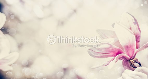 Close Up Of Pink Magnolia Flowers Floral Border Stock Photo Thinkstock