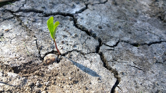 Closed Plants Concrete : Growth plant stock photos and pictures getty images