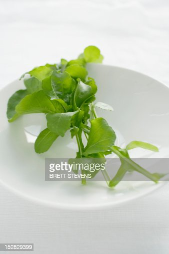 Close up of plate of rocket