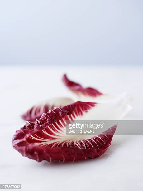Close up of radicchio leaf