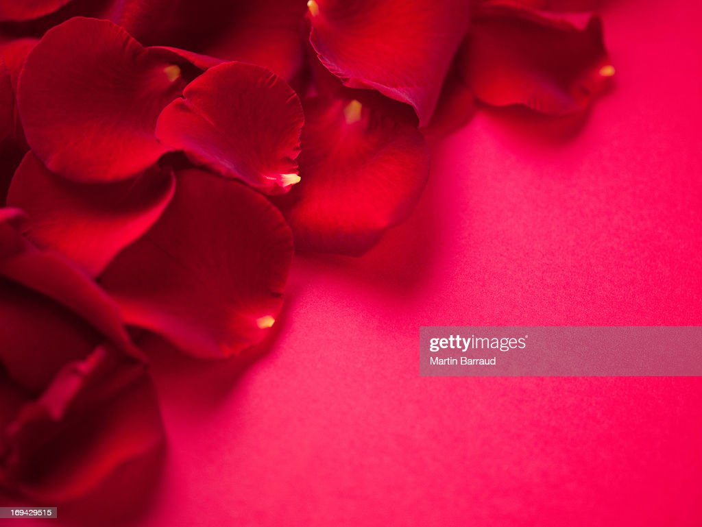 Close up of red rose petals : Stock Photo