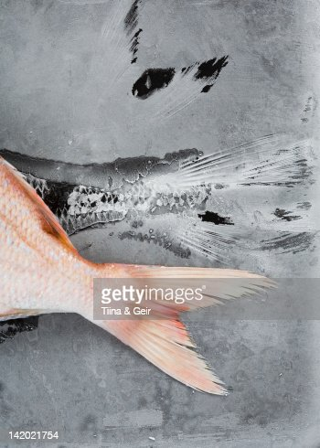 Close up of red tilapia tale : Stock Photo
