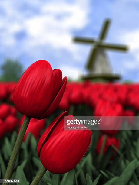 Close up of red tulips in Holland