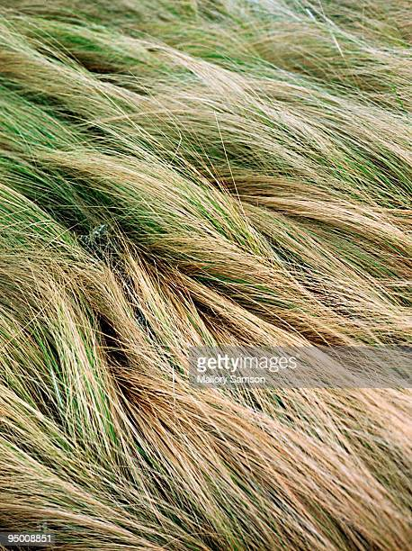 Close up of sea grass