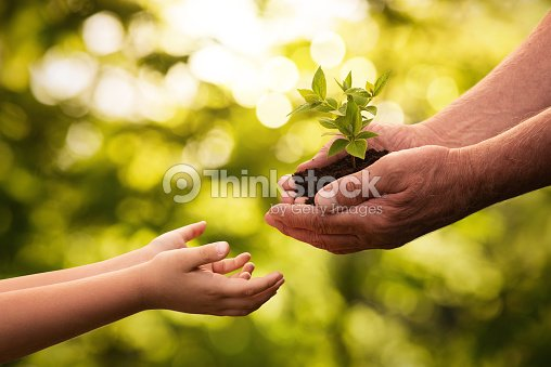 Close up of senior hands giving small plant to a child : Stock Photo