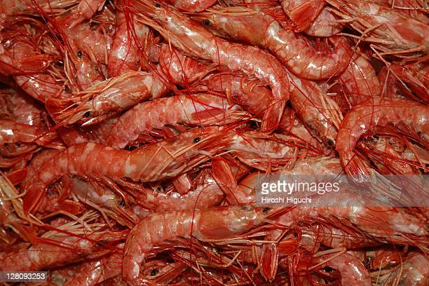 Close up of shrimps,Central Market, Athens, Greece