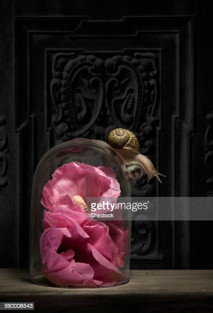 Close up of snail crawling on glass jar over flower
