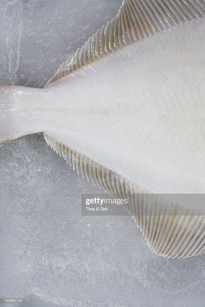 Close up of sole fish on ice : Stock Photo