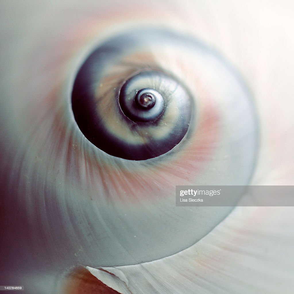 Close up of spiral shell : Stock Photo