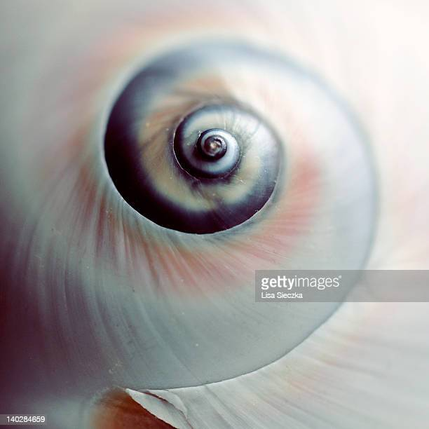 Close up of spiral shell