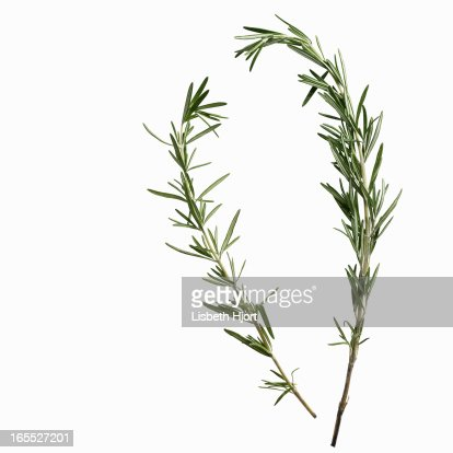 Close up of sprigs of herbs