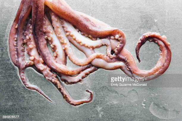 Close up of squid tentacles on metal tabletop