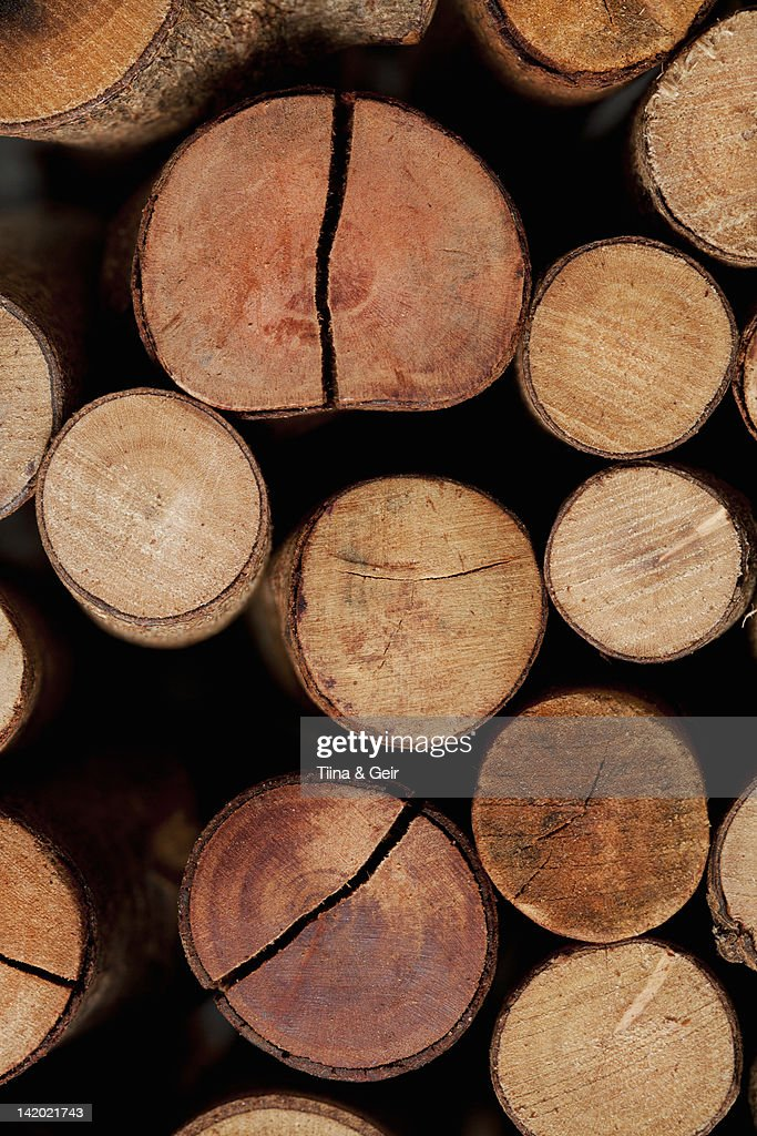 Close up of stacked logs : Stock Photo