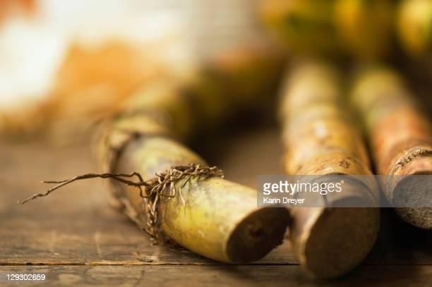 Close up of sugar cane stick