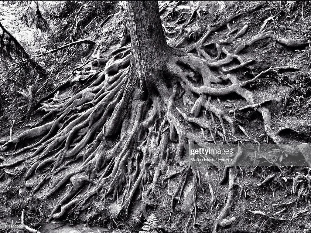 Close up of the roots of a tree