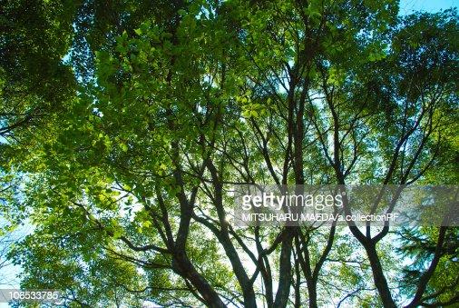 Close up of Tree