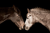 Close up of two horses nose to nose.