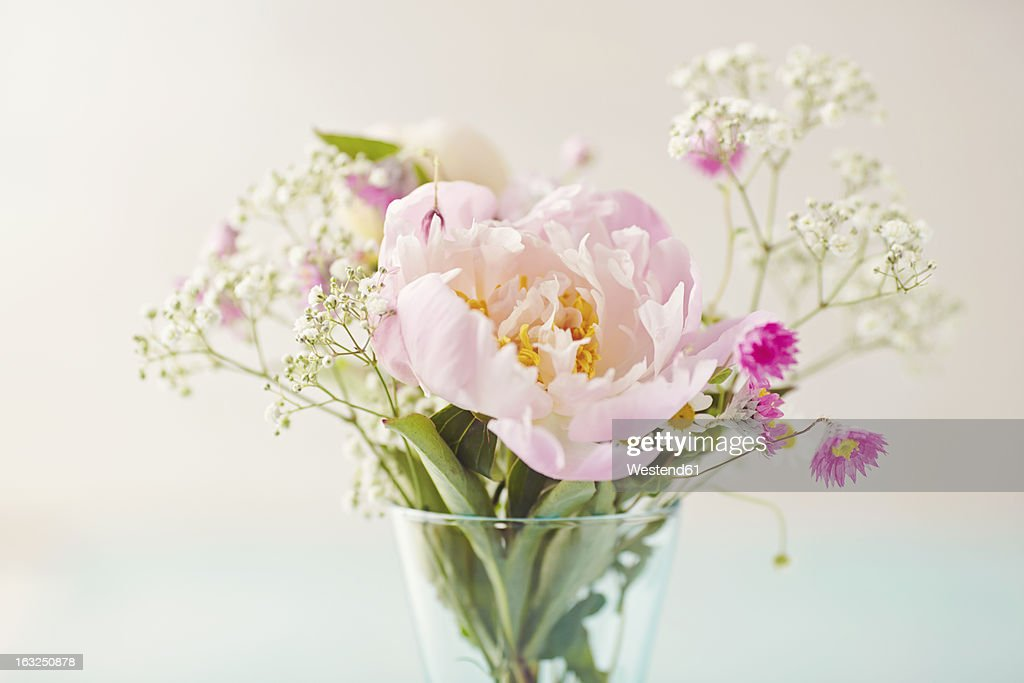 Close up of various flower against white background : Stock Photo