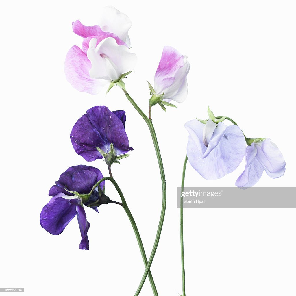 Close up of various purple flowers