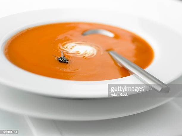 Close up of vegetable soup with fly in it