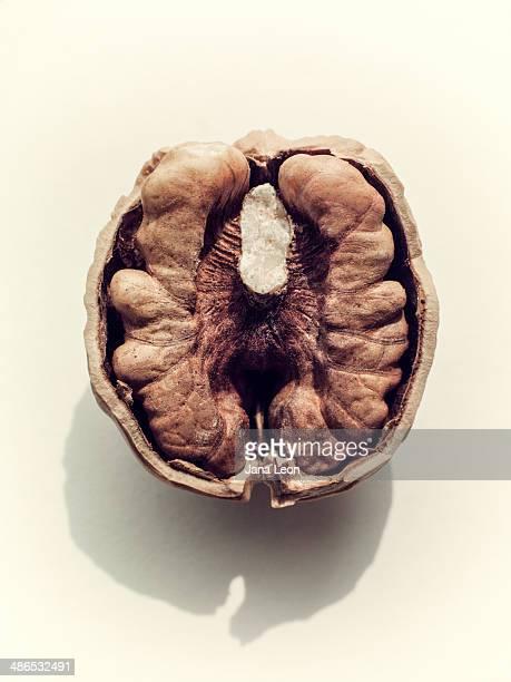 Close up of walnut half.