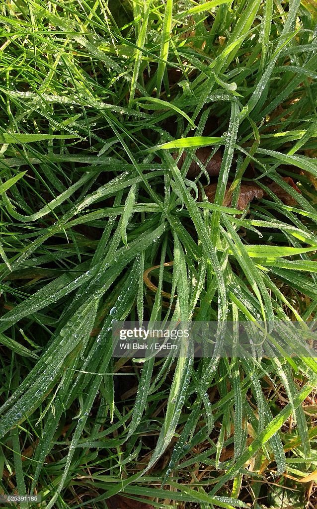Close Up of Wet Grass Blades