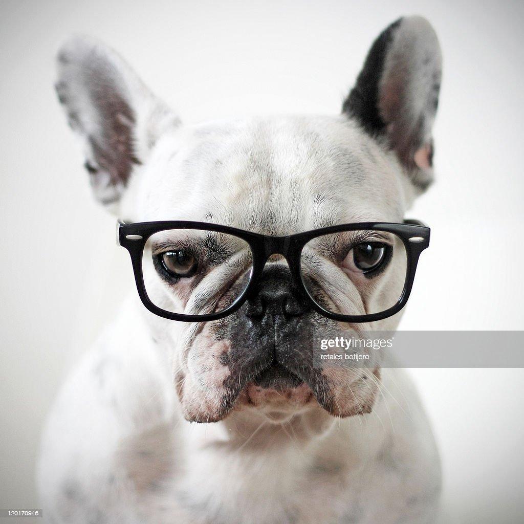 Close up of white dog : Stock Photo