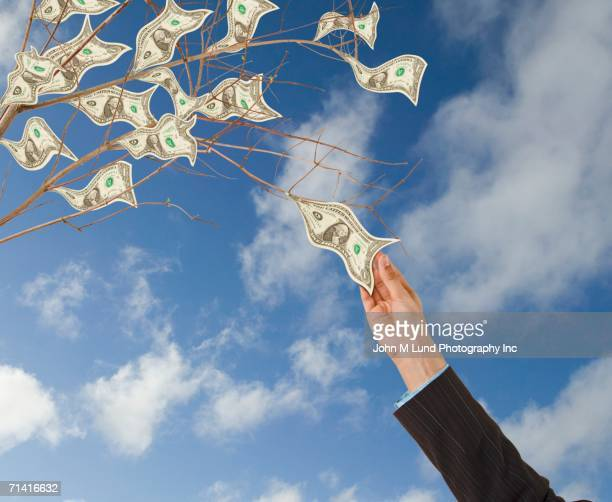Close up of woman's hand plucking money off of money tree